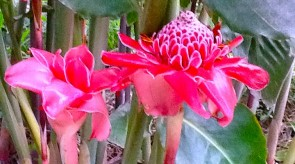 torch_ginger.jpg